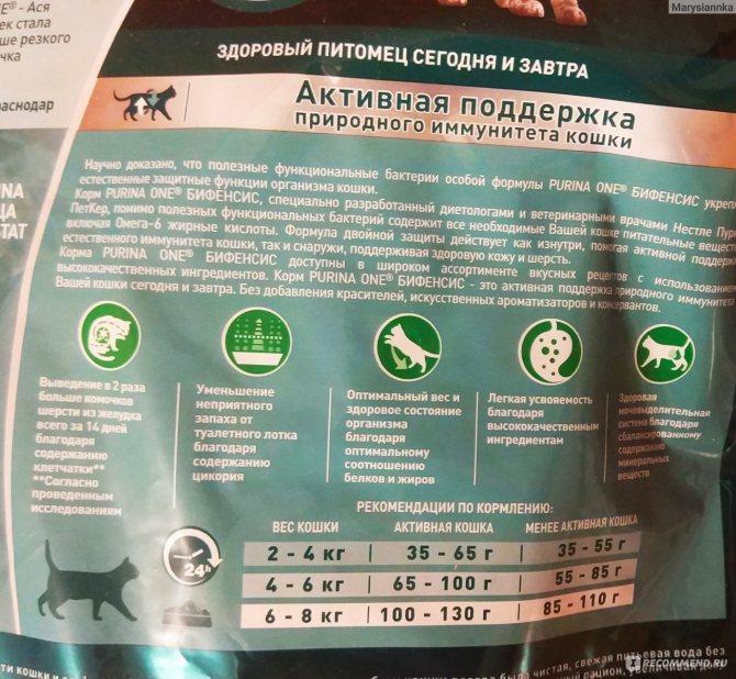 Можно ли кормить кошку и сухим и влажным кормом одновременно