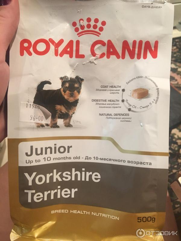 Лучший корм для йоркширского терьера