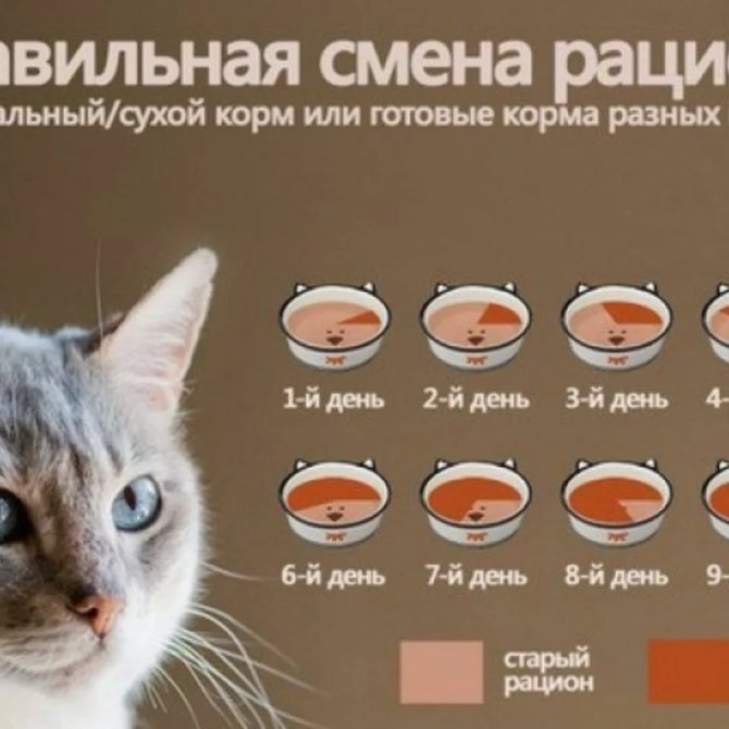 Как аллергику жить с кошкой — блог медицинского центра он клиник