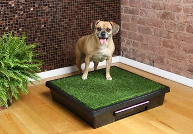 Как приучить собаку из приюта к туалету на улице? и можно ли это сделать, если собака взрослая?