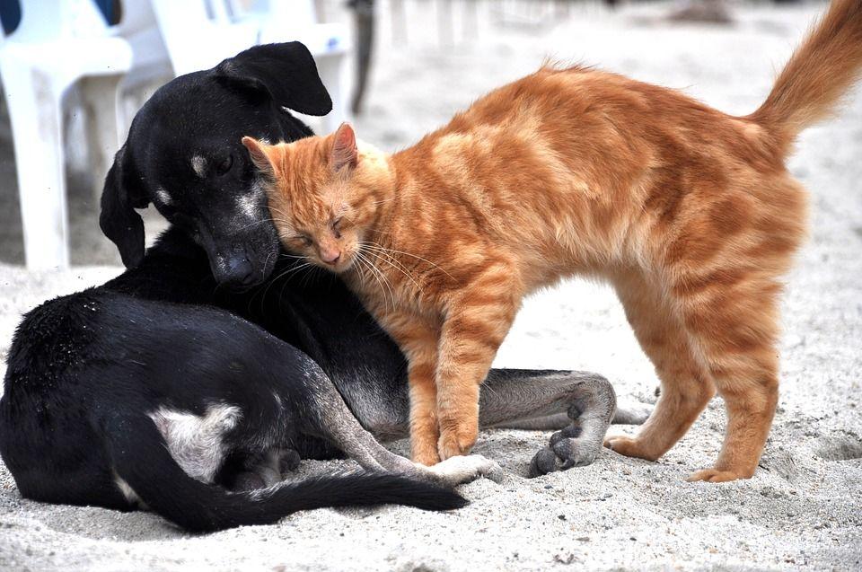 Есть взрослый кот завели котенка девочку