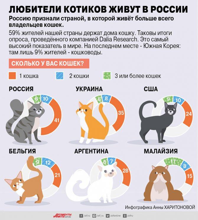 Распространенные мифы о кошках - выясняем правду с hill's   hill's pet