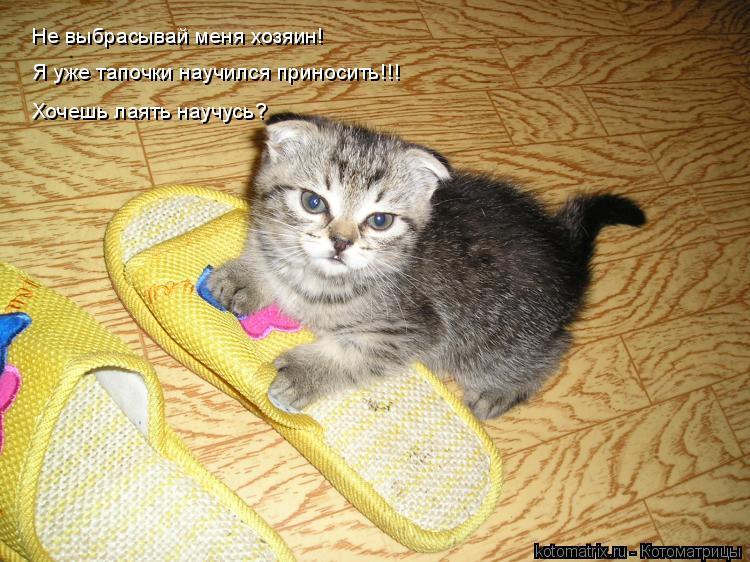 Дрессировка кошек — основные команды с трюками и пошаговой инструкцией по обучению кота в домашних условиях