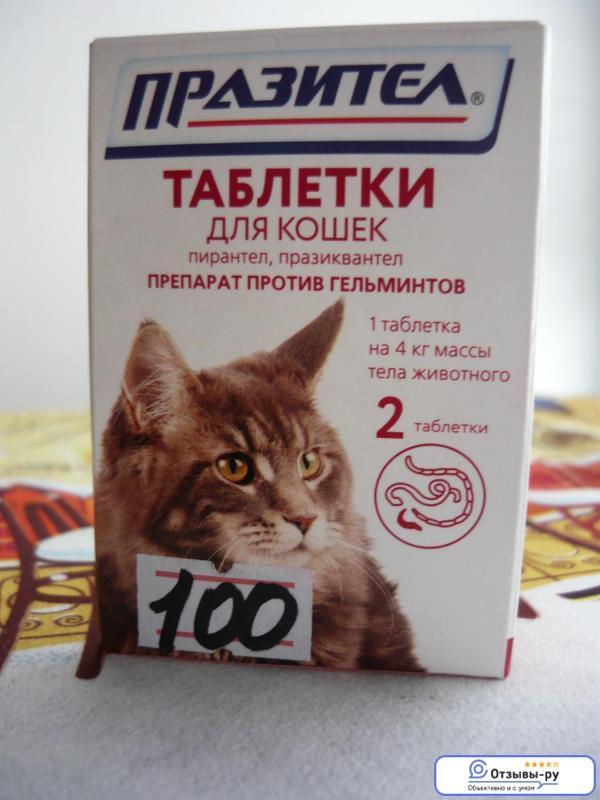 Как давать лекарство животным: кошке, собаке и прочим. все методы.