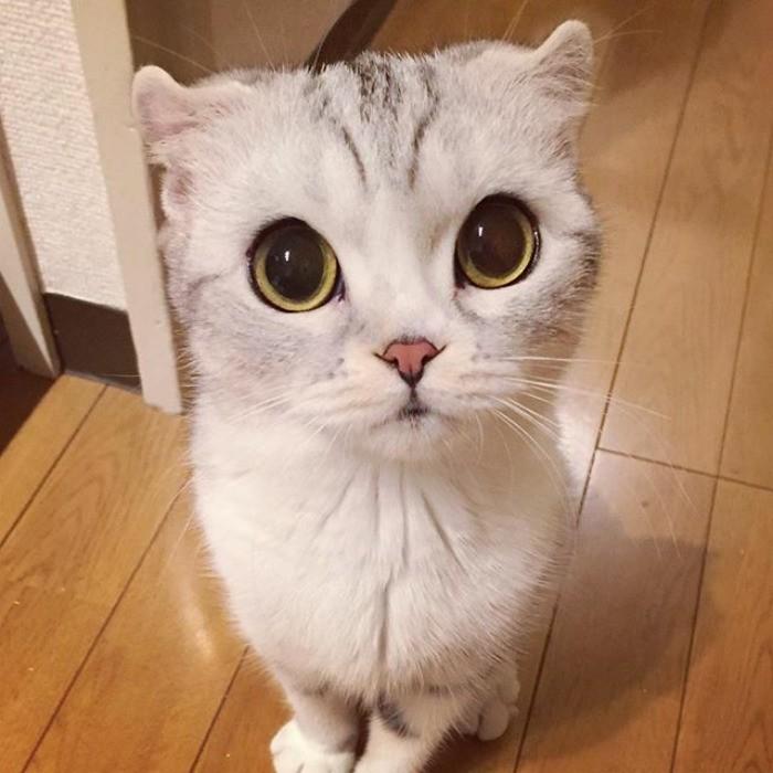 Топ-10 самых красивых пород кошек