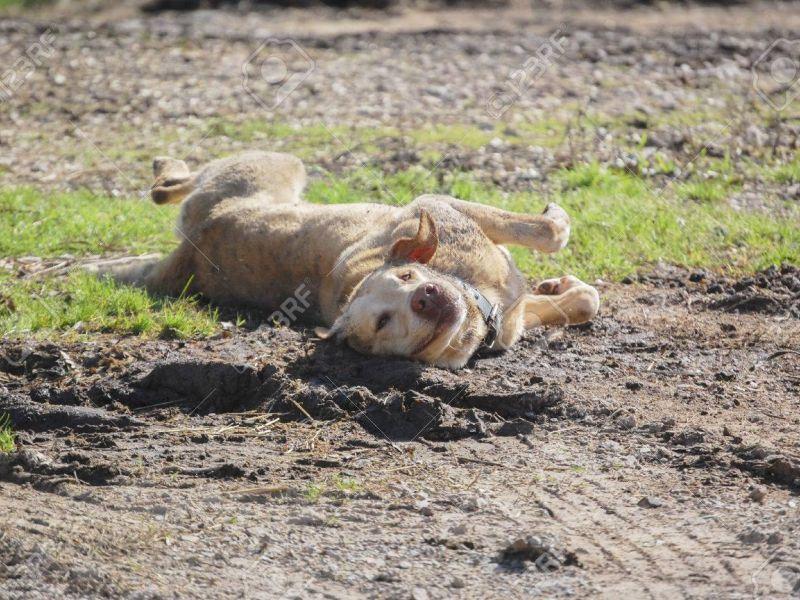 Зачем собаки едят траву, основные причины такого поведения
