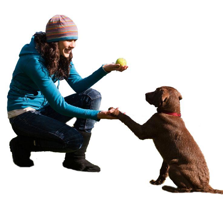 Как правильно наказывать собаку: виды наказания