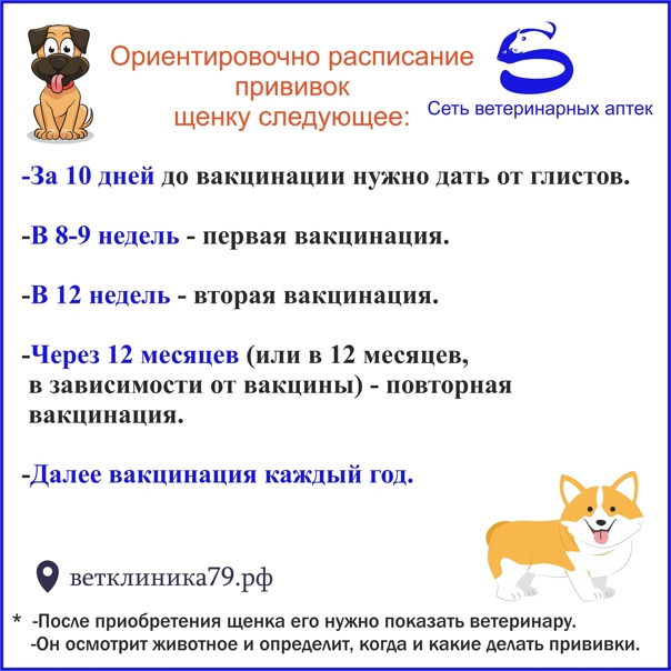 Прививка для собак: как подготовить к ней любимца и как часто должна проводиться вакцинация собак