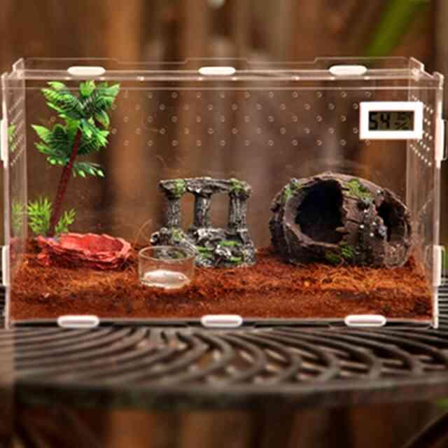 Террариум для улиток ахатин - виды, размеры, правила установки
