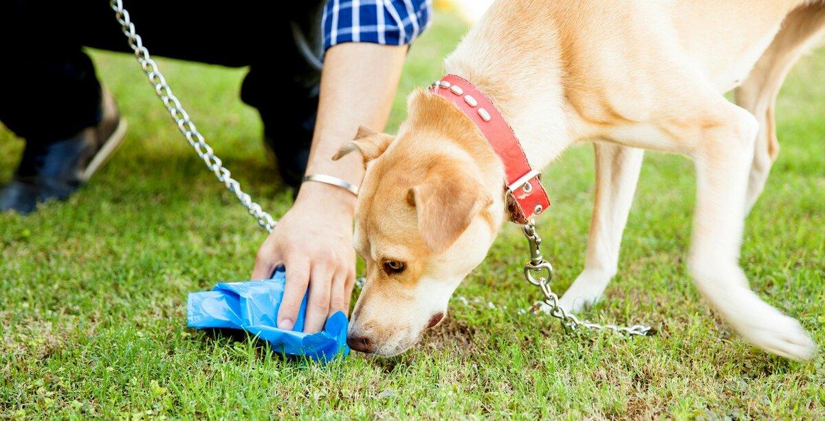 Почему собаки роют ямы? - ветеринарная клиника zoohelp