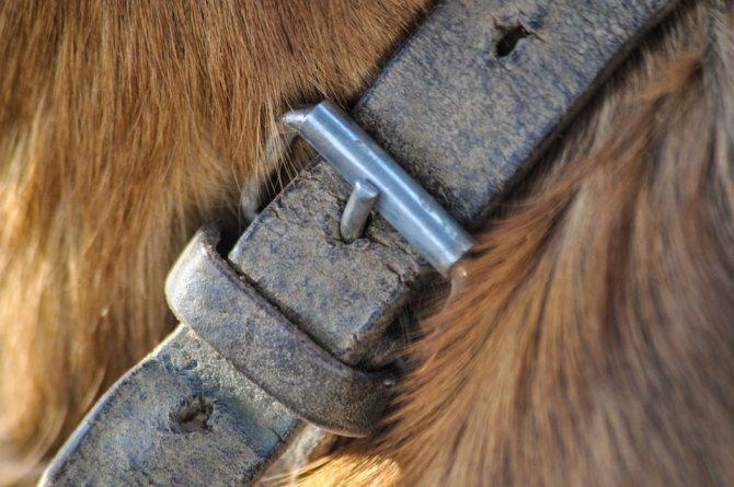 Противоблошиный ошейник для собак: инструкции и отзывы