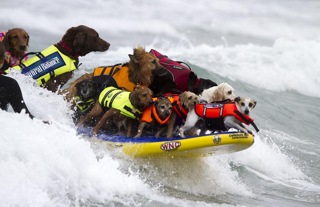 Служебные собаки — спасатели людей. на службе, и в горах, и на воде — лучшие породы собак спасателей