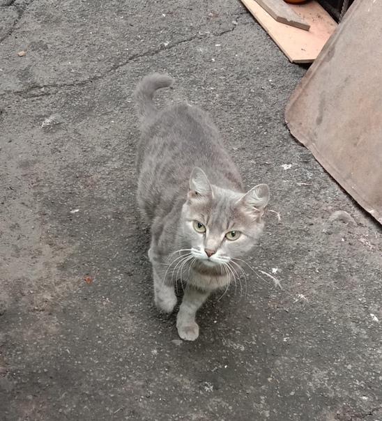 Причины, из-за которых коты убегают от нас