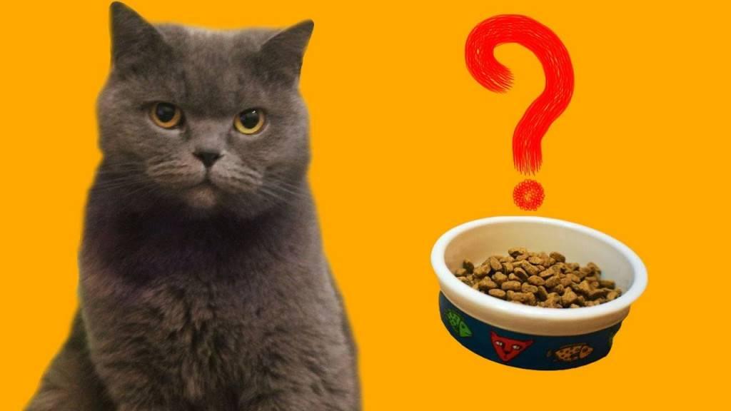 Кошка не ест: причины и решения | optimeal