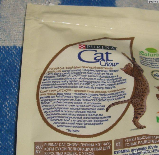 Корм для кошек: какой выбрать икак приготовить самому