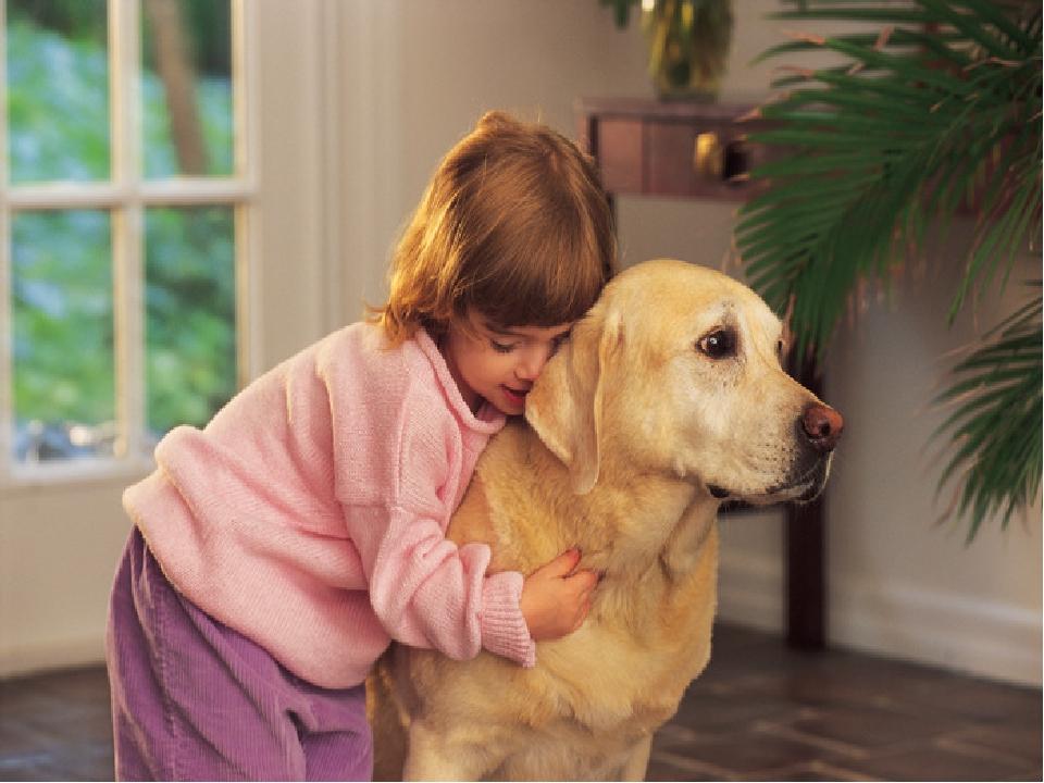 Топ-7 лучших пород собак для детей