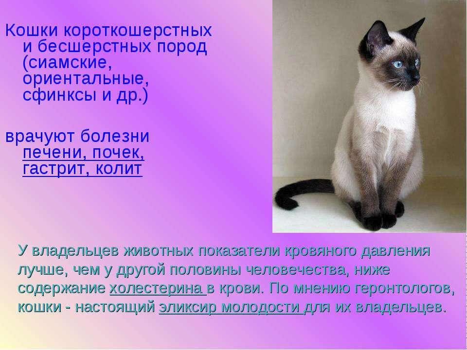 """Изучаем характер сиамской породы кошек   блог ветклиники """"беланта"""""""