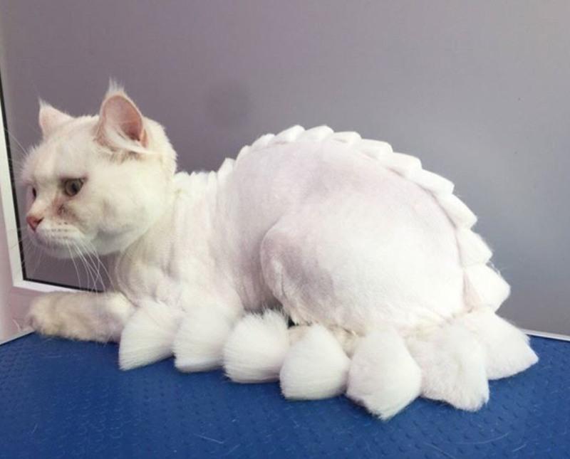 Как подстричь кота в домашних условиях: полезные рекомендации