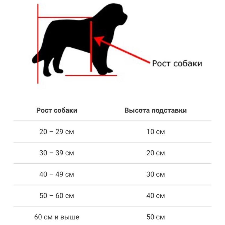Сколько лет живут собаки: продолжительность жизни по породам