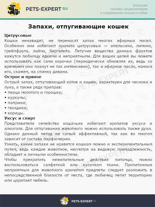 Барьер для пушистого питомца, или какие запахи не любят кошки   :: syl.ru