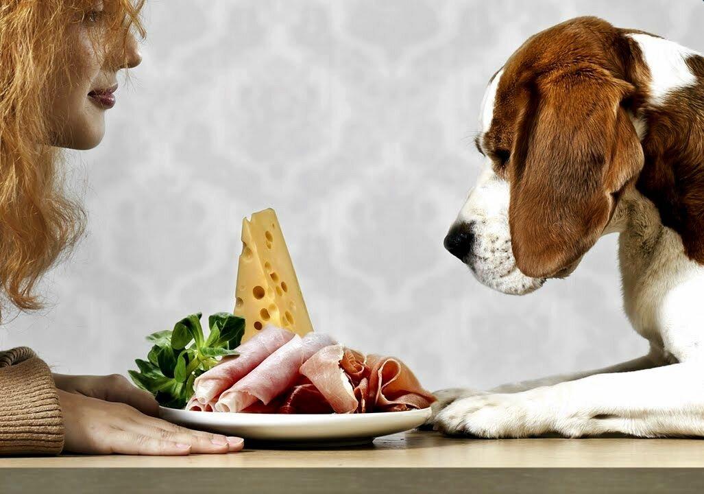 ᐉ почему нельзя кормить щенка со стола? - ➡ motildazoo.ru