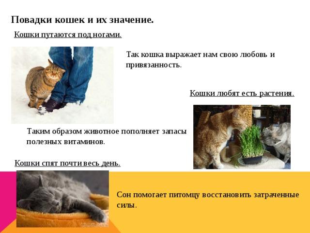 Способы, позволяющие выразить человеку свою любовь к кошке
