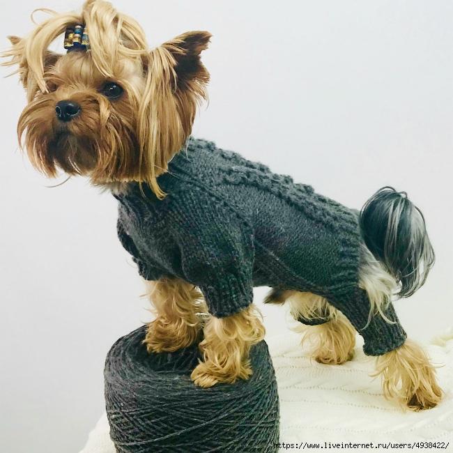 Вязанный комбинезон для чишки (небольшой мк) - гардероб для наших любимых питомцев (собак, кошек) - страна мам