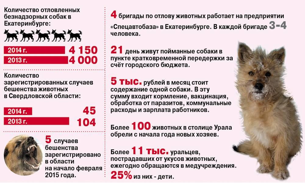 «собака бывает кусачей»: что делать, если водворе поселилась стая бездомных псов / происшествия красноярска и красноярского края  / newslab.ru