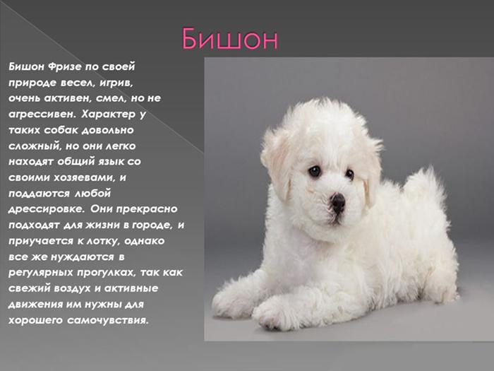 Бульдоги: все разновидности с фото, названием и описанием
