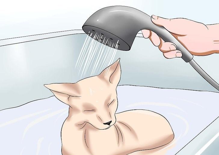 Можно ли мыть кошку обычным шампунем?