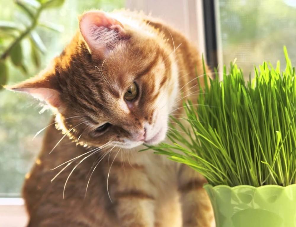 Почему кошки едят траву   hill's pet