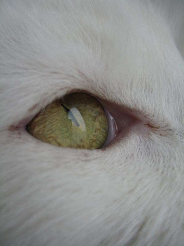 У кошки слезятся глаза что делать в домашних условиях