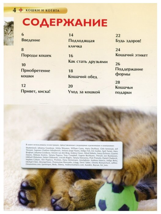 Как ухаживать за котенком: 30 советов по уходу для новичков