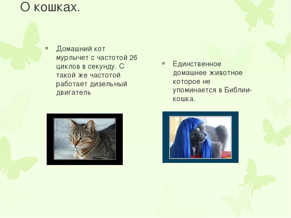 Почему кошки мурчат: интересные факты и предположения