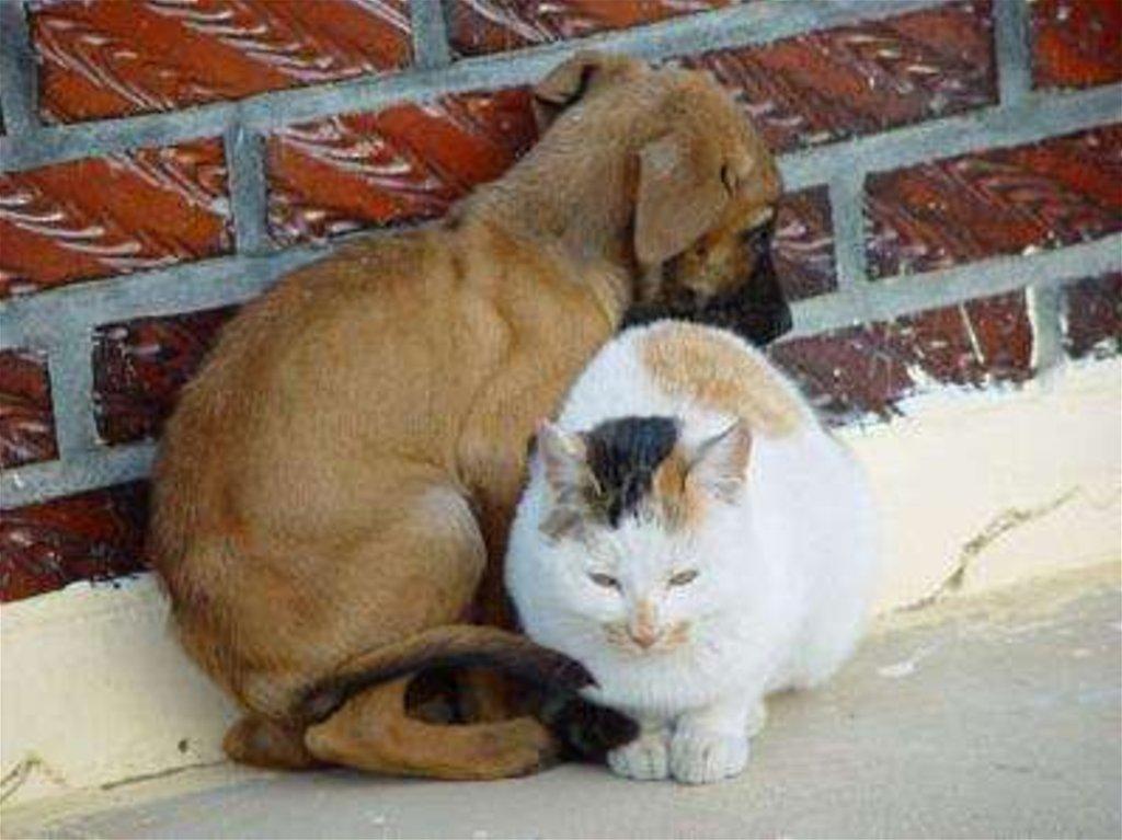 Переезд ипутешествие спитомцем. зоопсихолог— отом, как перевезти кошку, собаку идругих животных нановое место иненавредитьим