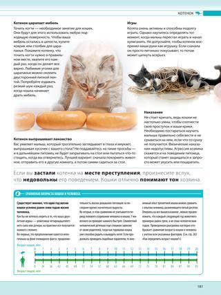 Как определить возраст кошки по глазам, по зубам, весу, шерсти, по человеческим меркам - блог о животных - zoo-pet.ru