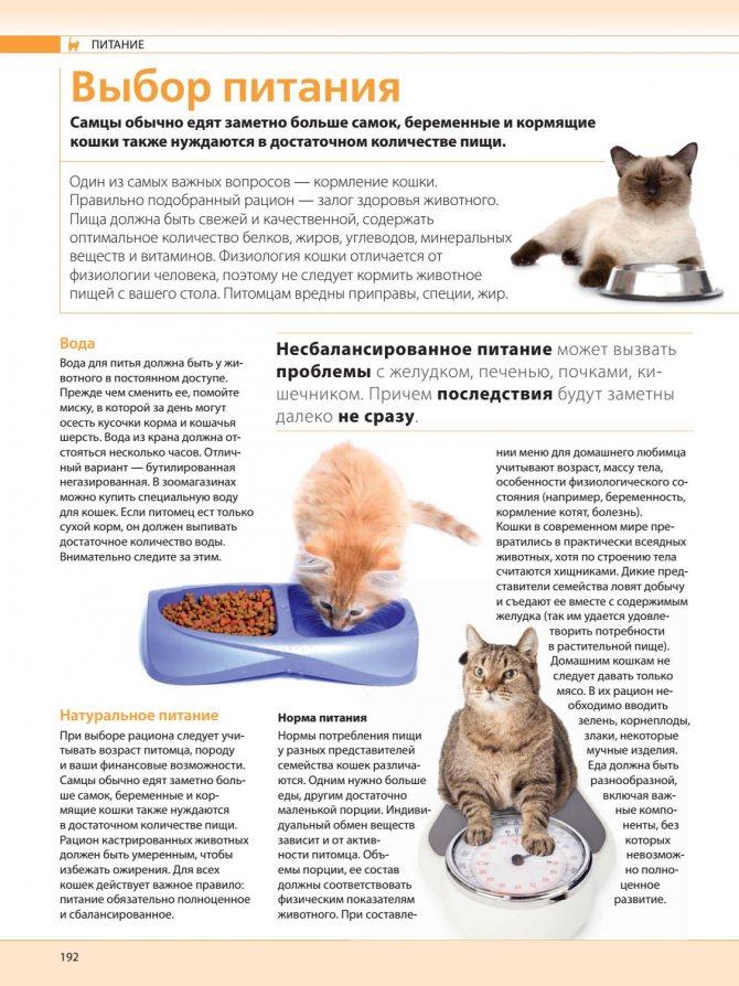 Можно ли кошкам и котам давать вареную курицу и сколько: как кормить вареным мясом котенка