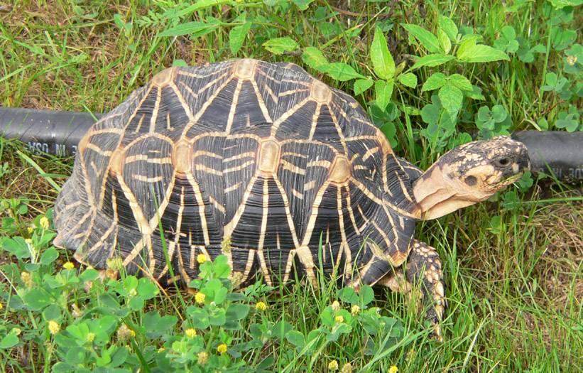 Сколько стоят черепахи, цены, где можно купить черепаху