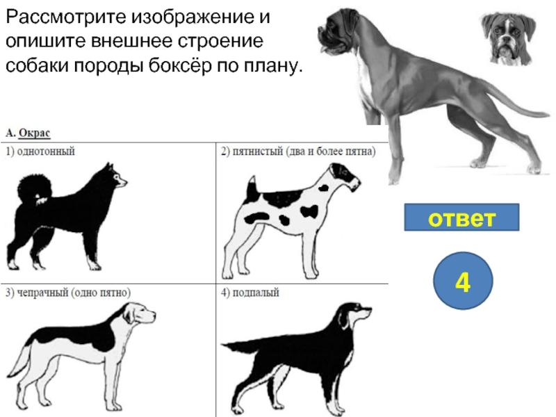 Золотистый ретривер собака. описание, особенности, характер, уход и цена породы | живность.ру