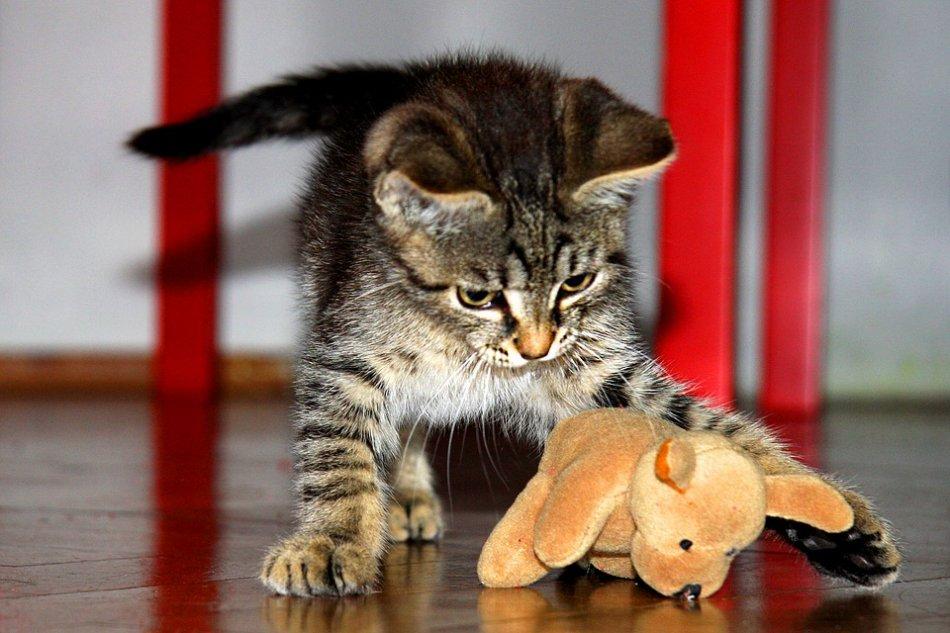 Какой игровой комплекс для кошки выбрать или как его самостоятельно изготовить?