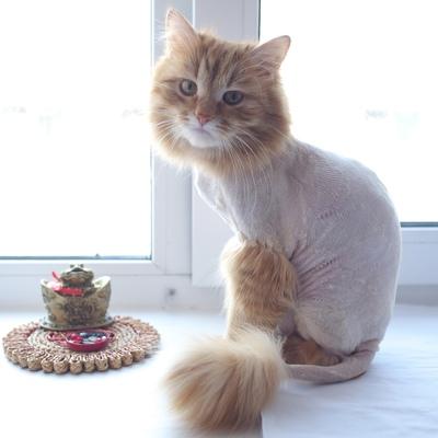 Для чего нужно делать груминг кошек - мир кошек