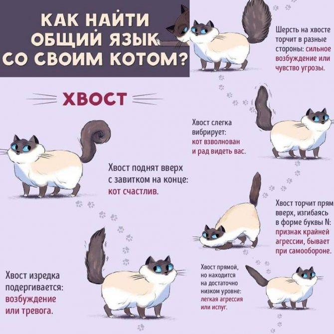 Как сказать кошке иди сюда по кошачьи. язык кошек