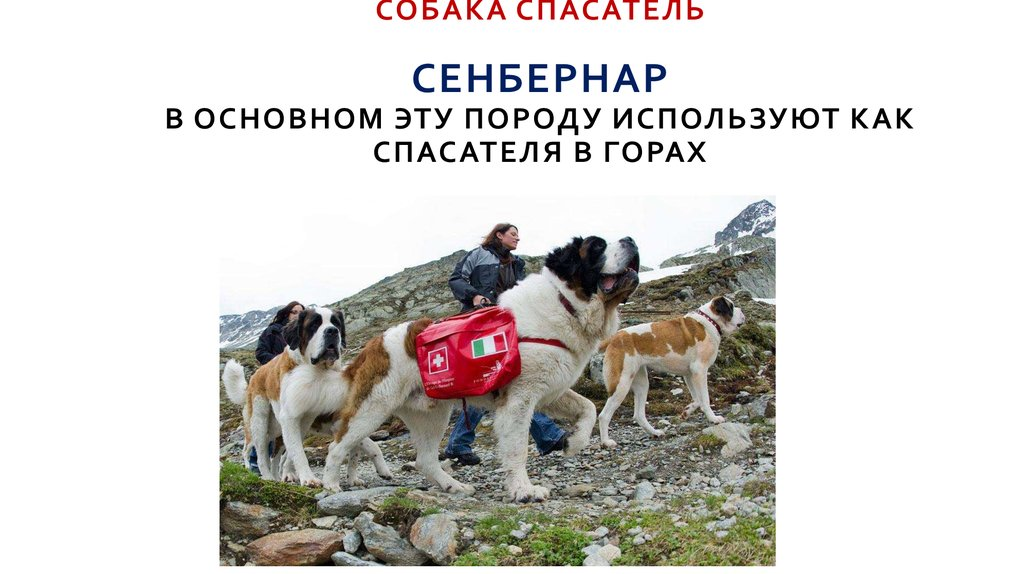 Собаки для охраны: рейтинг, обзор лучших пород