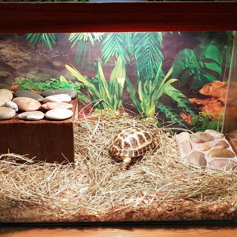Террариум для сухопутных черепах: обустройство, размеры