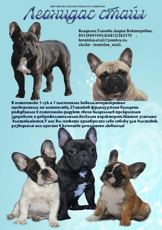 Французские бульдоги: черные, бежевые, кремовые, голубые, серые, белые, рыжие, красные, палевые, расцветки тигра, а также информация о редких окрасах и выборе щенка