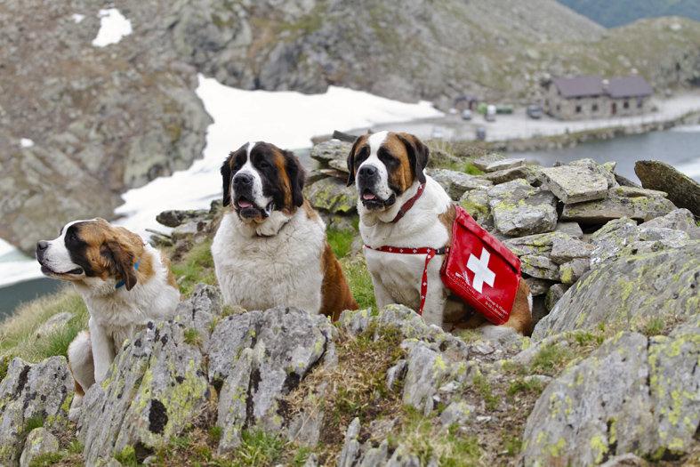 Собаки поисково спасательной службы