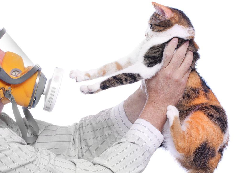 Все об аллергии у кошек