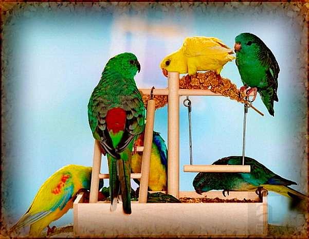 Уход за канарейками: что нужно знать? | zoodom