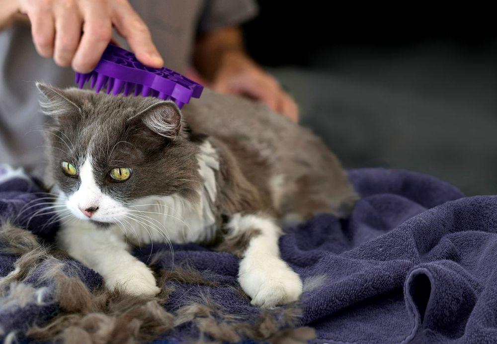 Что делать, если кошка сильно линяет круглый год в домашних условиях, причины выпадения шерсти