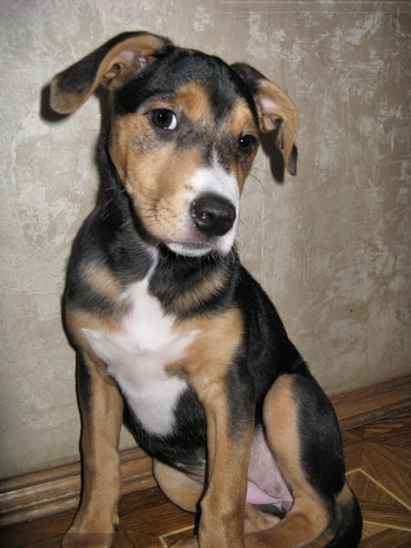 Как узнать породу собак по моему фото — сайт эксперта по животным